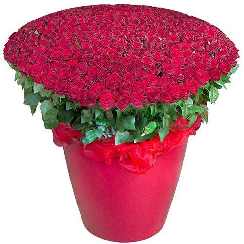 фото 301 червона троянда у великому вазоні
