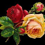 Купити квіти в Івано-Франківську