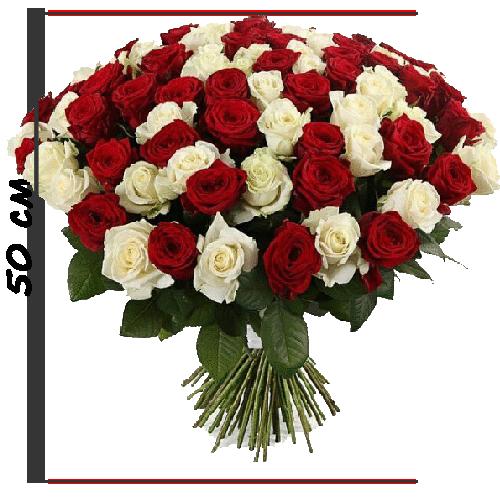 Фото товару 101 троянда червона та біла (50 см)