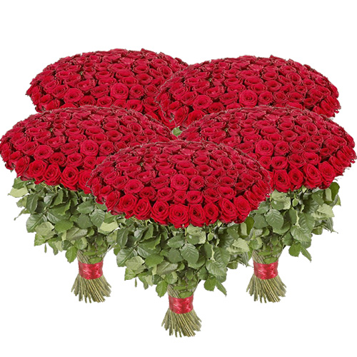 501 червона троянда фото товару