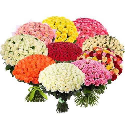 фото 1001 троянда різних сортів